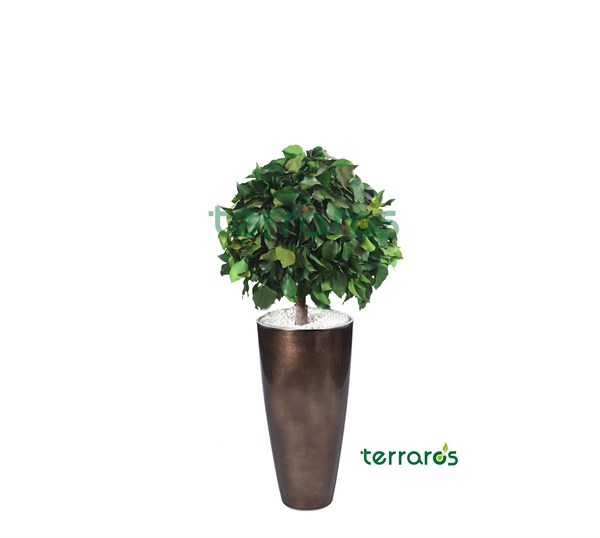 Hedera Topiary Ros